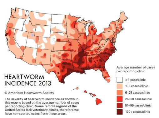 HW incidence